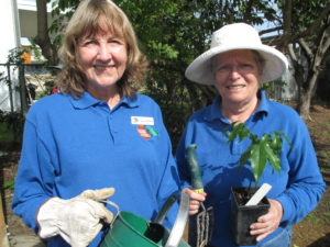 community garden launch